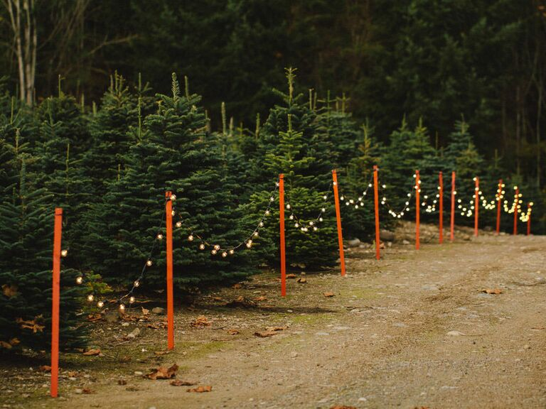 Christmas Tree Farm Asheville Nc.10 Christmas Tree Farms Where You Can Actually Get Married