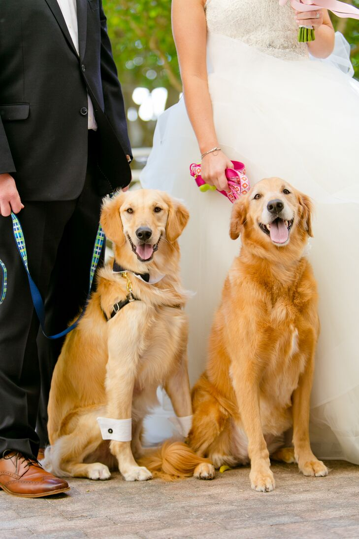 """Lauren and Andy consider their golden retrievers their """"babies,"""" so of course they popped up during the wedding. Remsen and Harley were ready for photos in a bow tie collar, cuffs and matching black cuff links and a perfectly groomed coat."""