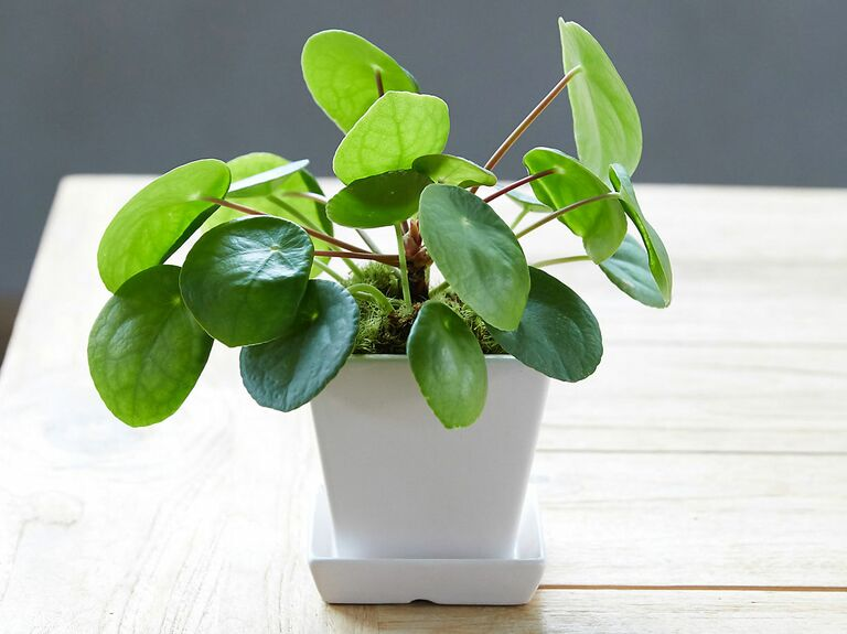small plant in white pot