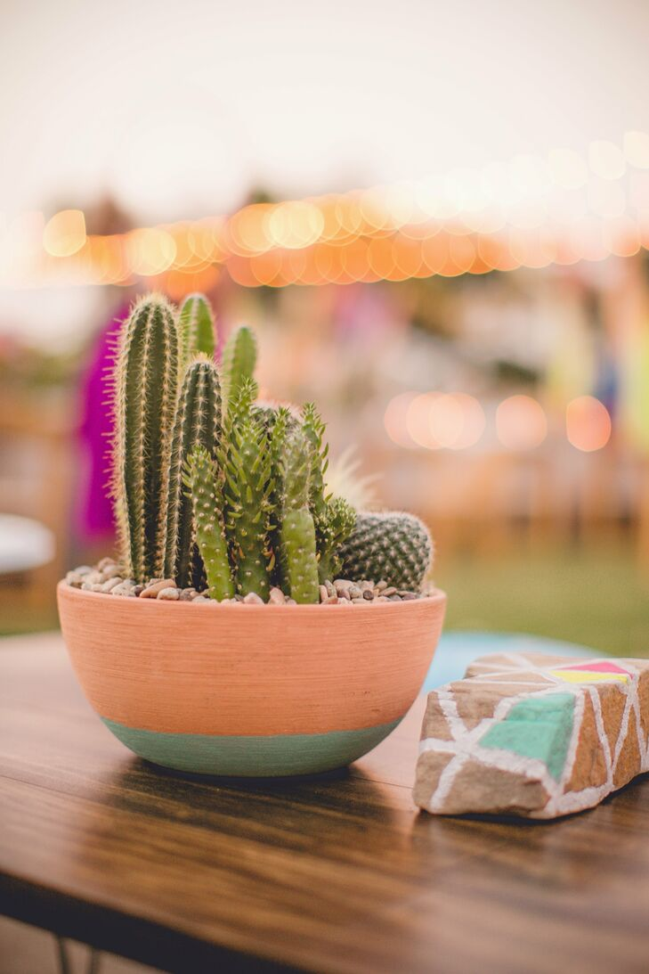 Potted cacti sat atop the coffee table in the reception's lounge area.