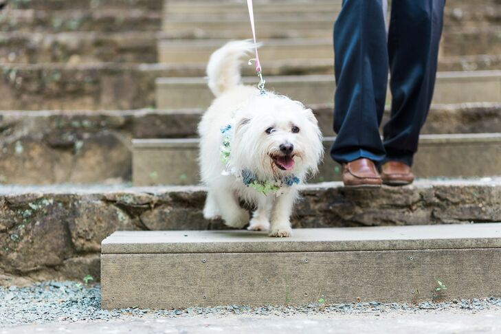 Chelsea and Clay's adorable white dog served as the ring bearer. It wore a blue, green and white floral wreath around its neck to match the palette.