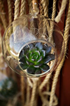 Hanging Succulent Ceremony Backdrop Accent