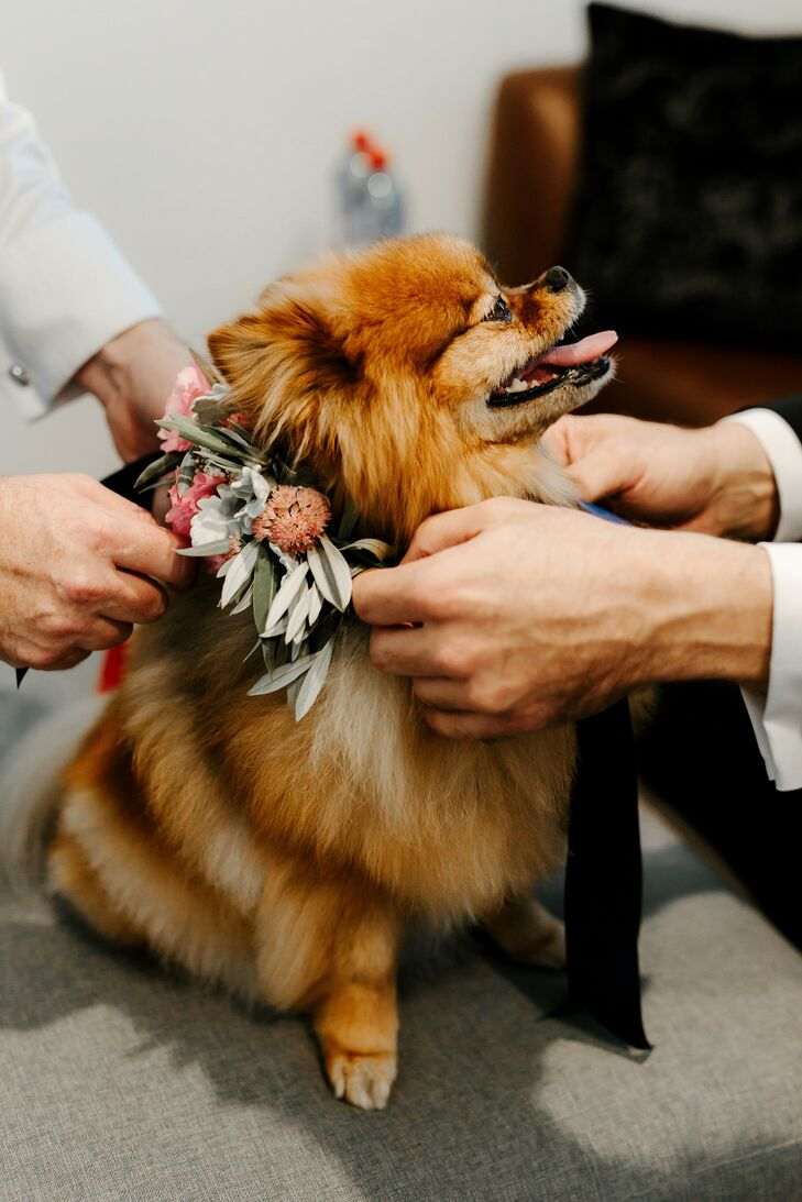 Dog with Floral Collar at Wedding in Australia