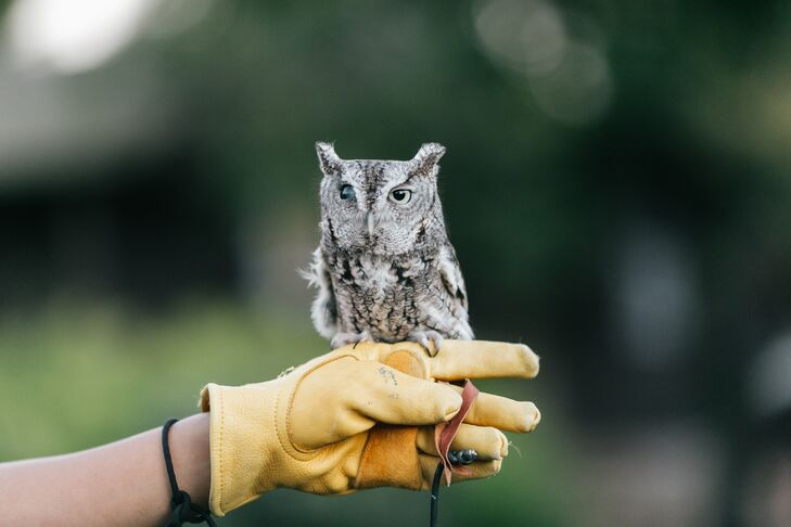 During the cocktail hour, one of the National Audubon Society's rescued birds, a petite eastern screech owl named Samuel Adams, visited the couple.