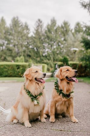 Dogs with Greenery Collars for Wedding in Western Michigan