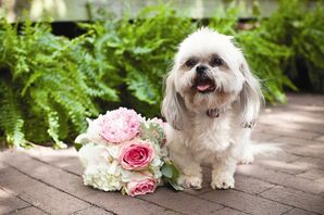 The Flower Dog