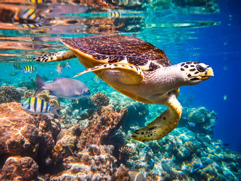Underwater scene of turtle and other marine life