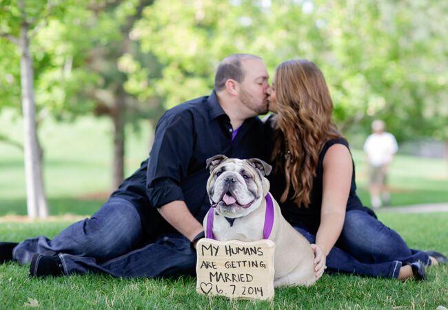 Engaged couple with bulldog