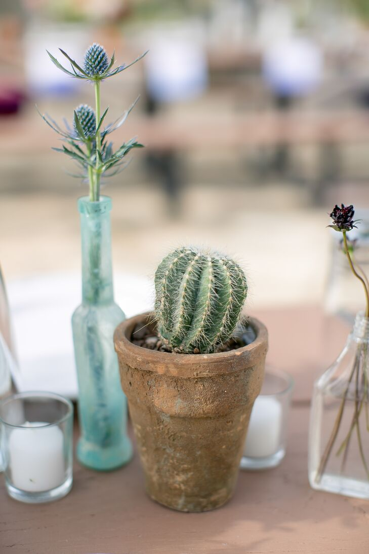 Small Potted Cactus Centerpiece