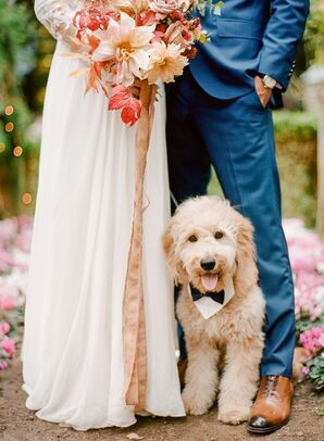 Cute Dog in Custom Bow Tie Outfit