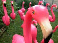 Pinky917