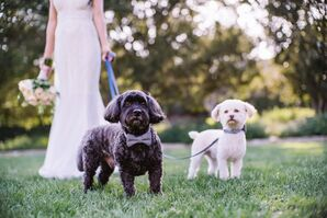 Puppy Ring Bearers