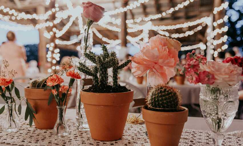 Cactus and flowers on a table with venue in the background