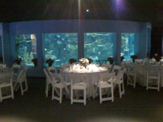Coupons mystic aquarium ct