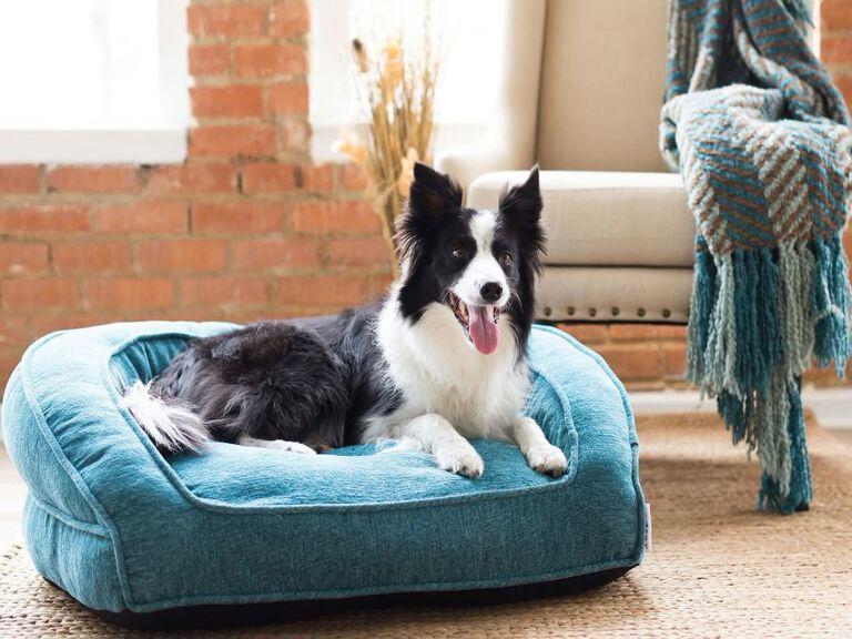 dog sofa 17th anniversary furniture gifts