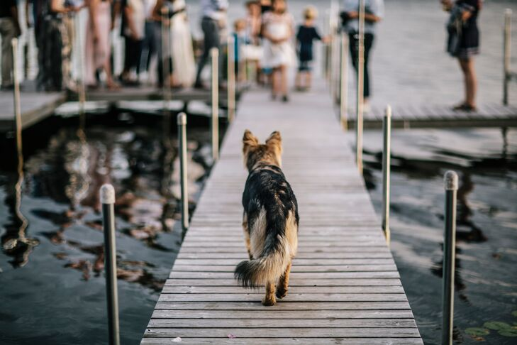 "The couple's two rescue dogs wore special collars as ring bearers, but they didn't carry the actual rings down the dock. ""Could you imagine if the rings fell in the lake?"" Danielle says of the wedding at her family cabin in Fifty Lakes, Minnesota."