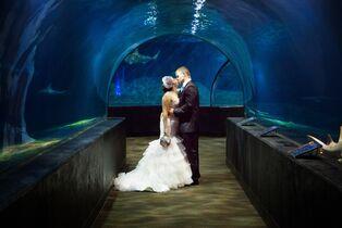Park wedding venues in tulsa ok the knot oklahoma aquarium junglespirit Images