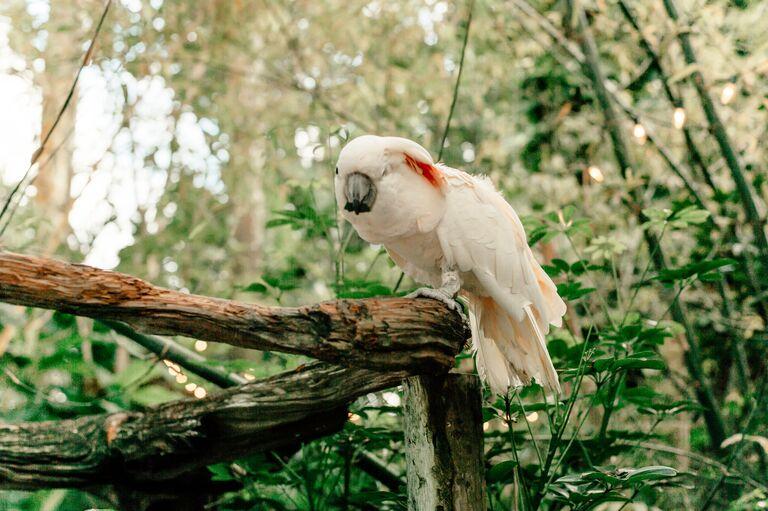 vanessa morgan wedding shoes parrots walton house