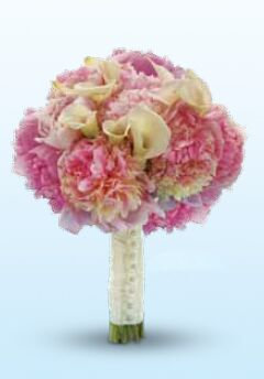 Inglis Oracle Florist