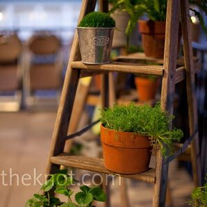 Potted Plant Decor