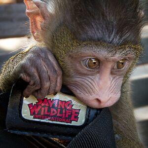 Malibu, CA Animal For A Party   Saving Wildlife International