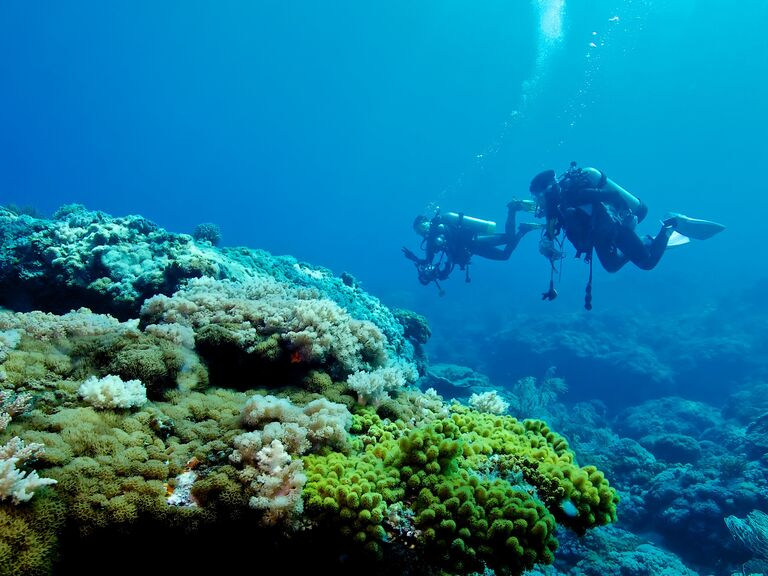 Two people scuba diving among coral