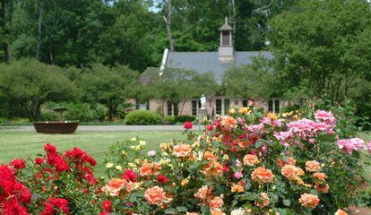 f51c4293 a727 41cc 8db4 b31fa4ed678e~rs 414 - Baton Rouge Garden Center At Independence Botanical Gardens