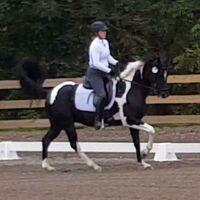 horsesmeetbaby