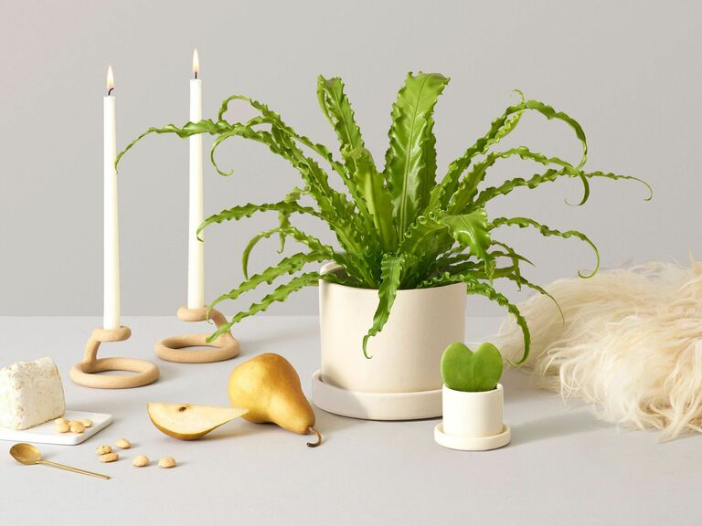potted plant gift online delivery service