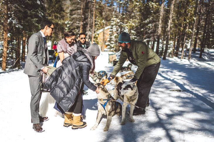 Good Times Adventures Dogsledding Dogs in Colorado