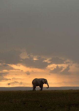 elephant backdrop in kenya | Jonas Peterson | The Knot blog