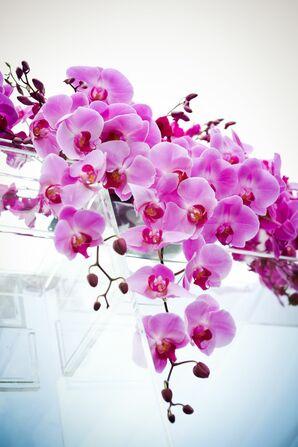 Phalaenopsis Orchid Huppah Decpr