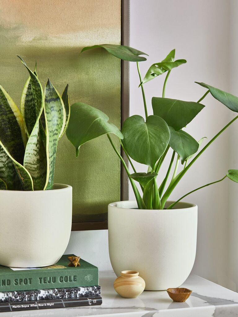Two house plants in white ceramic pots