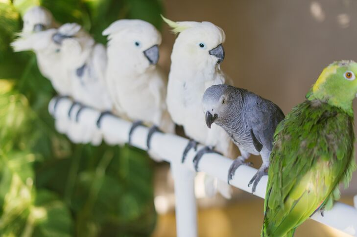 Nodding to the tropical location, a white perch filled with native parrots greeted guests as they arrived at the ceremony.