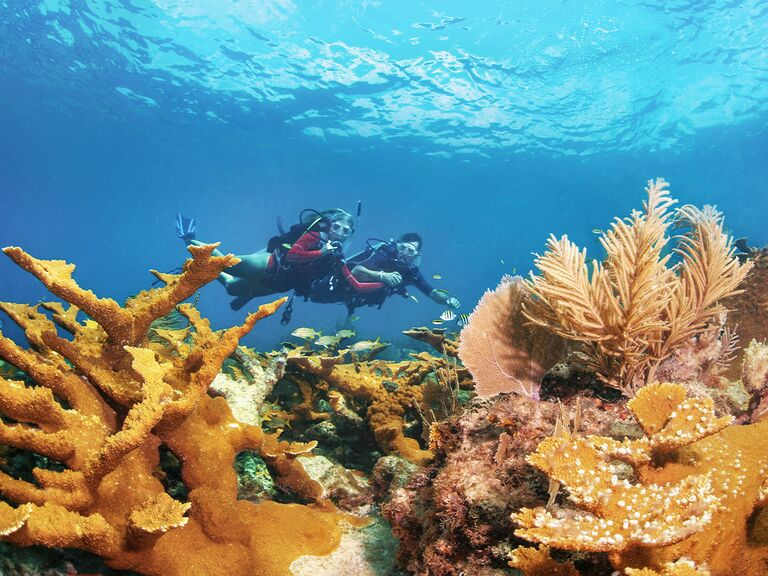 Couple scuba diving through colorful coral reef