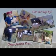 Perris, CA Petting Zoo | Great Petting Zoos/great Pony Parties