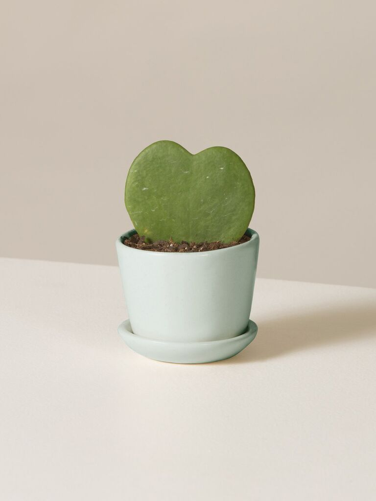 Heart-shaped succulent gift for sister-in-law